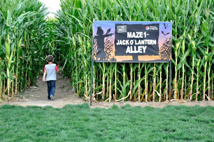 2. The Corn Maize And Pumpkin Patch, Ogden