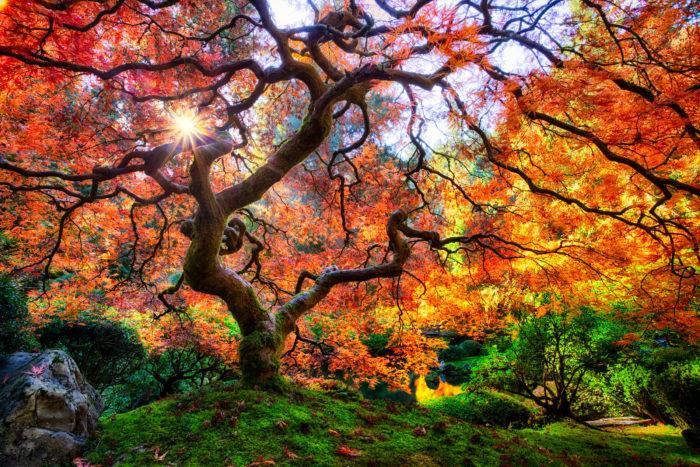 3. Portland Japanese Garden