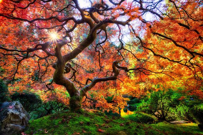 First stop: The Portland Japanese Garden.