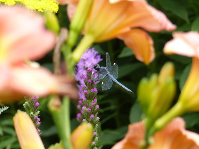 The gardens attract friendly insects.