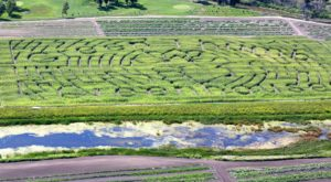 Get Lost In These 5 Awesome Corn Mazes In North Dakota This Fall