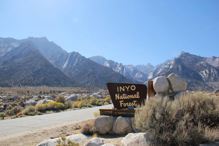 4. We're also proud to have the oldest trees in the world located inside the Inyo National Forest.