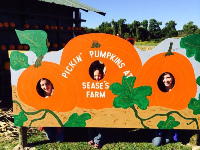 Pick Your Own Pumpkin Patch South Carolina