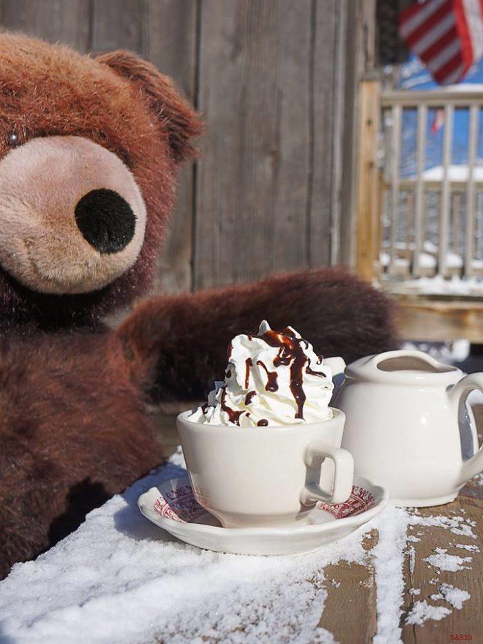 The bears here don't hibernate.