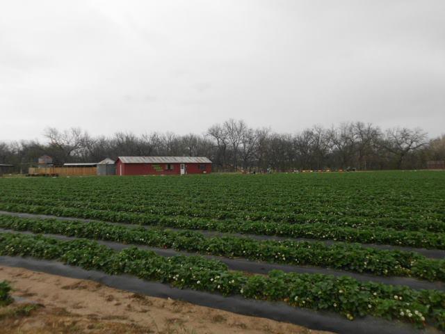 2. Sweet Berry Farm