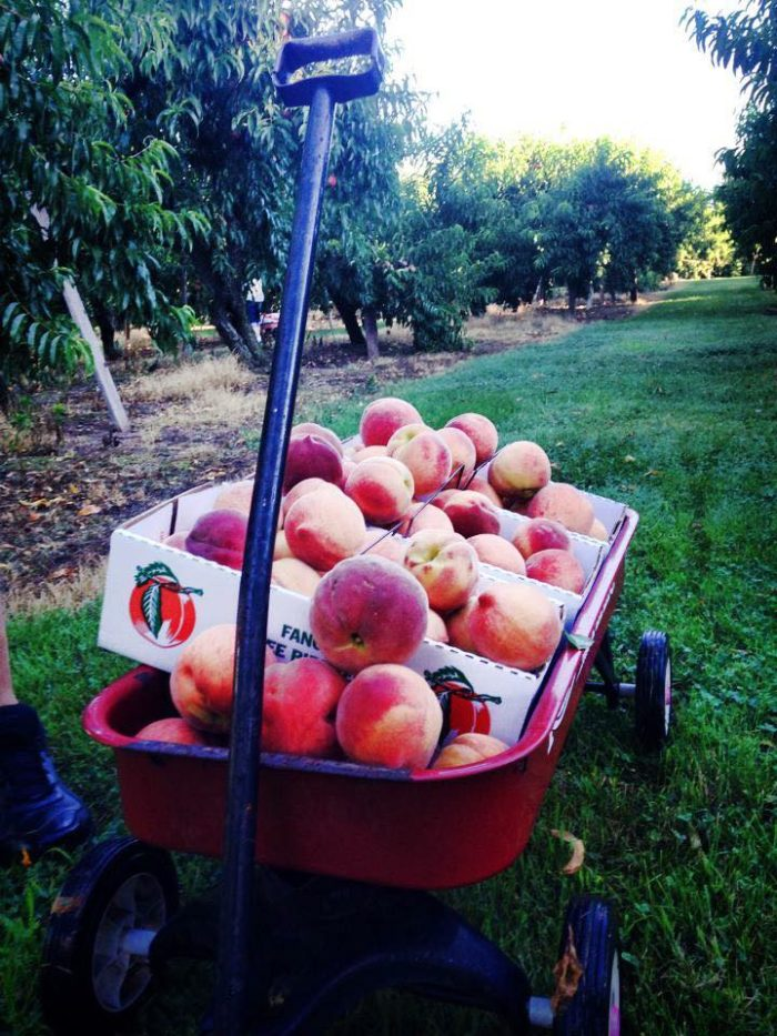 3. Breedens Orchard - Mt. Juliet