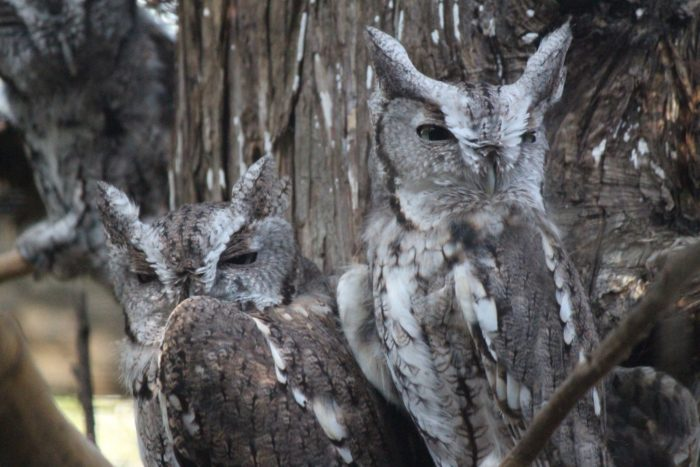 Plenty of birds make their home at the park, as well. These owls keep a watchful eye on things.