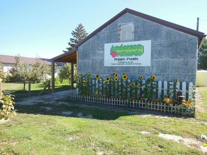 4. Anderson Orchards, Rudyard