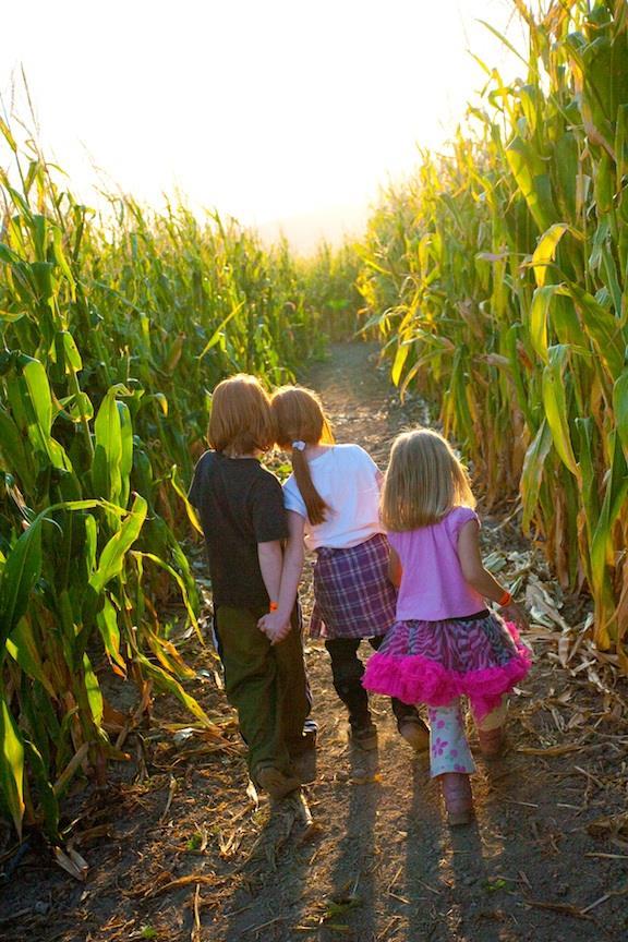 1. Cornbelly's Corn Maze And Pumpkin Fest, Lehi