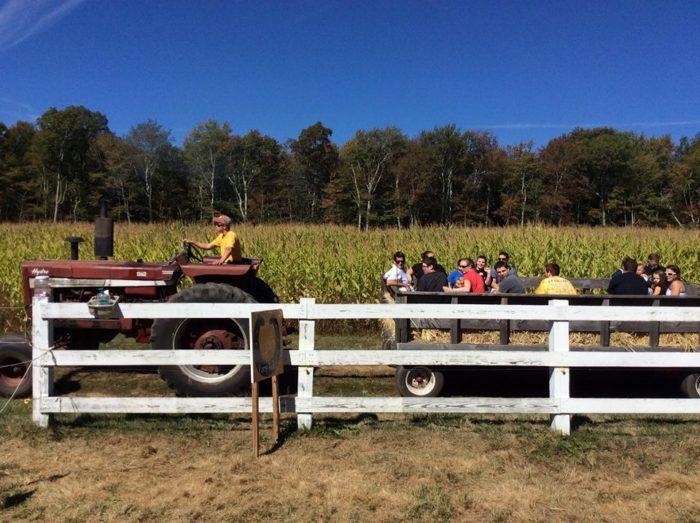 5. Cucumber Hill Farm, Foster