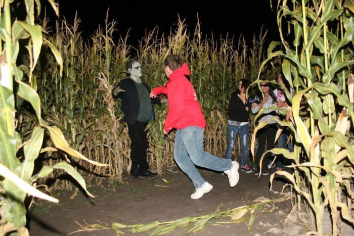 8. Carter's Crazy Corn Maze, Garland