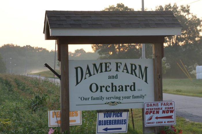 6. Dame Farm Orchard, Johnston