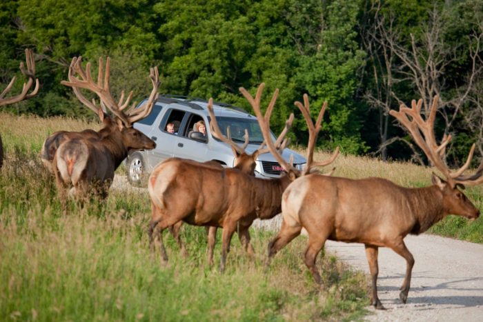 This isn't like the drive-through safaris you'll find in other states.