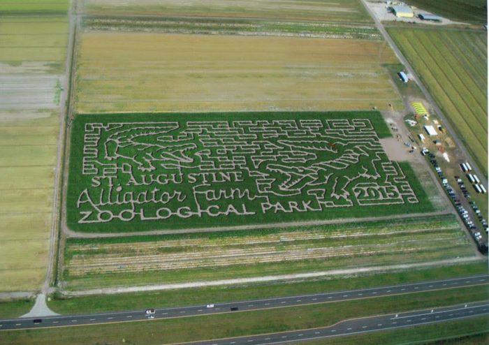 17 Best Corn Mazes In Florida