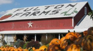 These 12 Charming Pumpkin Patches In Ohio Are Picture Perfect For A Fall Day