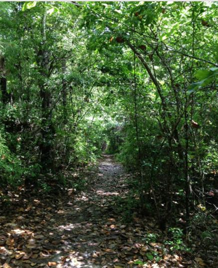 The park's Nature's Way Trail is a 2-mile loop trail and is considered feasible for all skill levels.