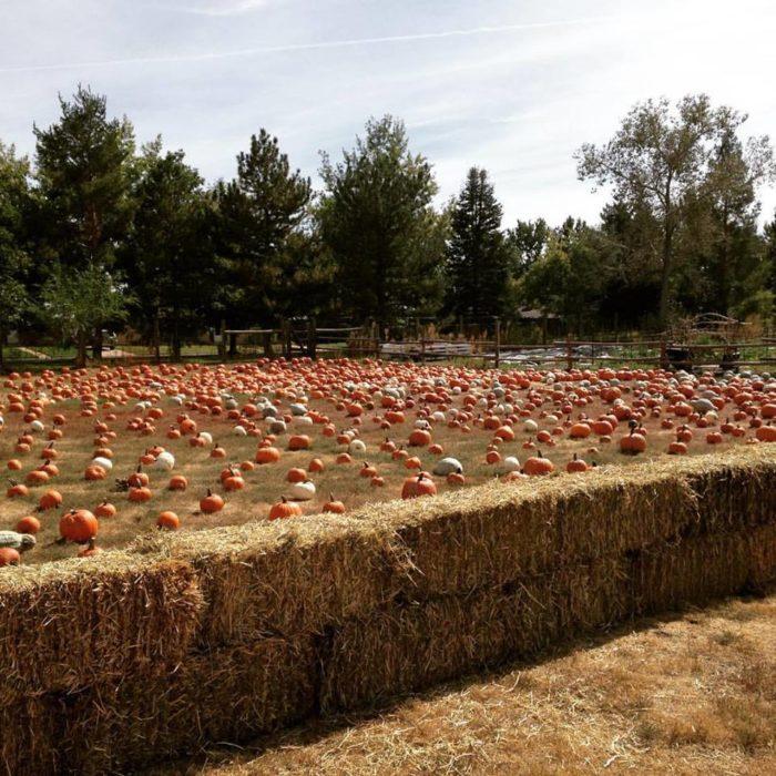 4. Pumpkin Harvest Festival at Four Mile Historic Park, Oct. 1 & 2