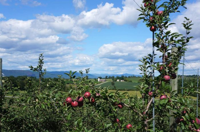 Or stop in on your way to go apple picking.