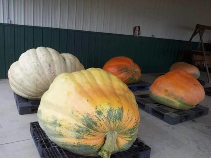 6. West Virginia Pumpkin Festival - Oct 6 to Oct 9, 2016