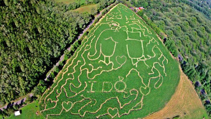 6. Castle Hill Farm (Newtown)