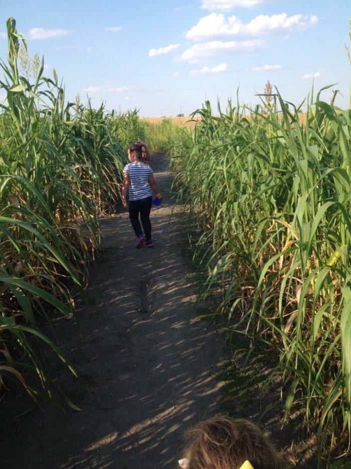 5 Corn Mazes Around Austin To Visit In 2016