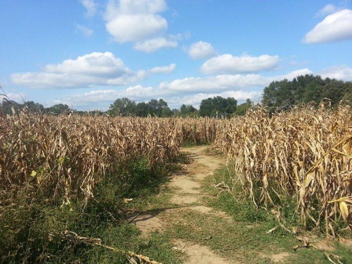 8. Baker Corn Maze, Baker