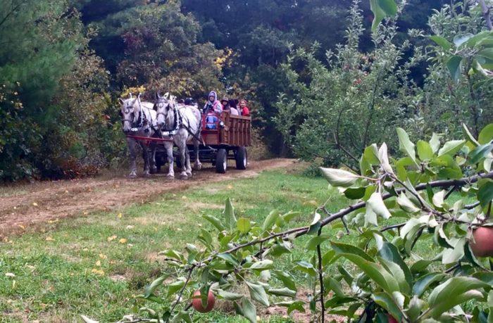 7. Hill Orchards, Smithfield