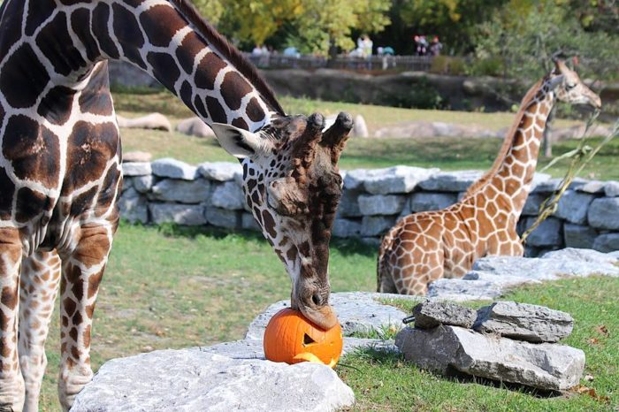 5. Zoo Boo (October 7-9th, 14-15th, and 21-22nd, Detroit)