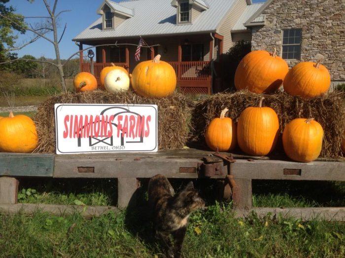 10. Simmons Farms (Bethel)