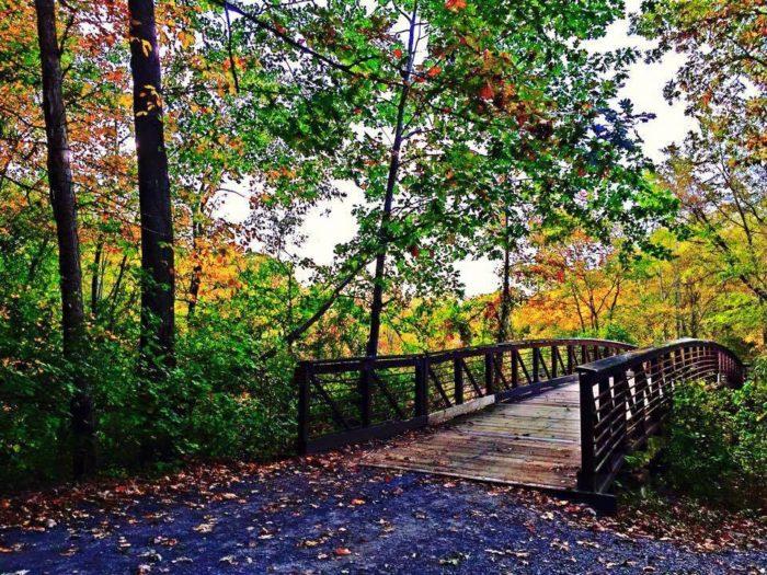 Pondside Trail, Killens Pond State Park