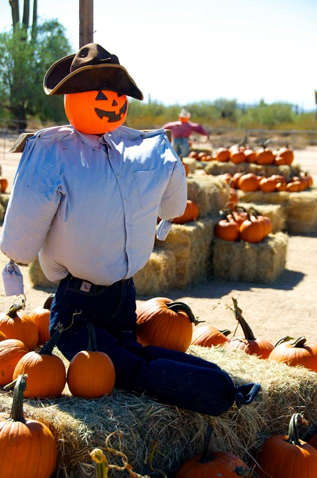 3. MacDonald's Ranch Pumpkin Patch (Scottsdale)