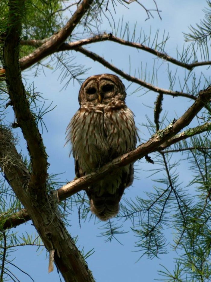 And if you're really lucky you'll spy an owl here.