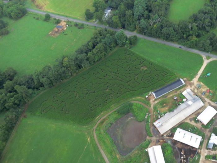5. Hayes Dairy (North Granby)