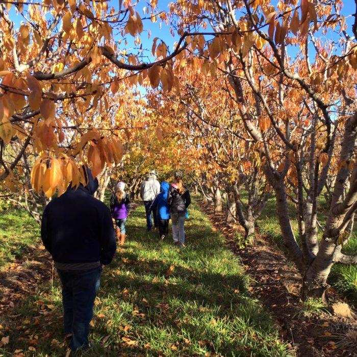 10. Fruit Basket Orchards (Grand Junction)