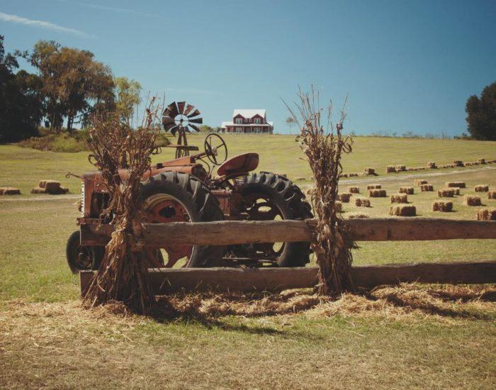 4. Coon Hollo Corn Maze. Micanopy
