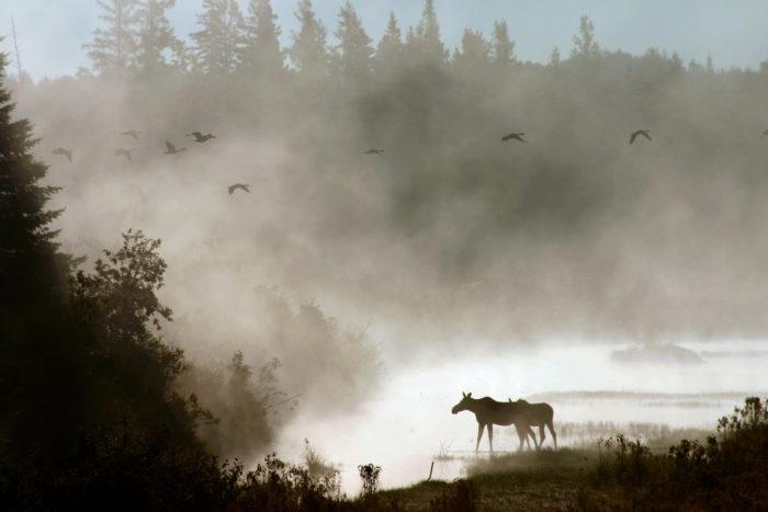 4. Aroostook National Wildlife Refuge, Caribou