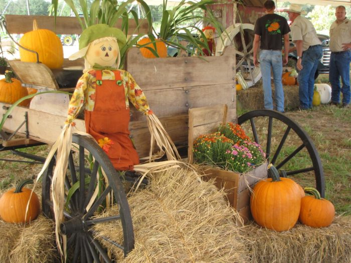 1. The Pickin' Patch, Dunnellon