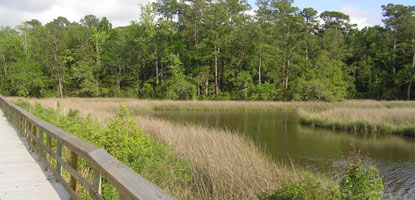 The trail is broken up into different sections. The first consists of a ½-mile loop trail, which can be extended by following the pedestrian bridge over the bayou or heading across the street to a bayou overlook.