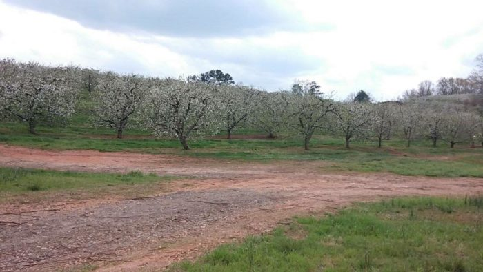 1. Bryson's Apple Orchard - Mountain Rest, SC