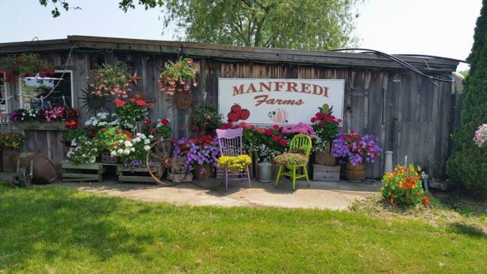 6. Manfredi Farms, Westerly