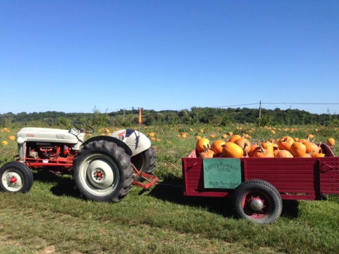 8. Libby's Pumpkin Patch (Albany)