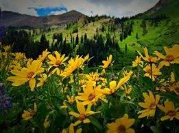 2. You'll find billions of wildflowers here.