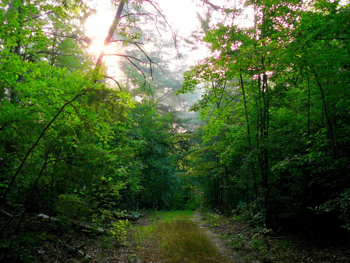 Located in Brandywine, you'll find the beautiful Cedarville State Forest.