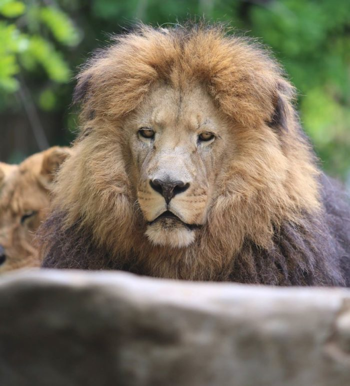 Today the park is home to more than 100 different species of animals, including big...