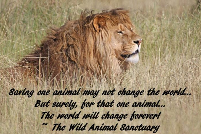 The Sanctuary affords viewers an unprecedented way to experience rescued wildlife, while also allowing the animals an unprecedented amount of freedom in an environment that is spacious and comfortable.