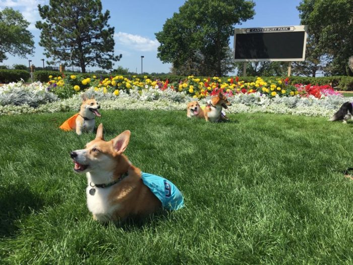 And don't even get us started on the special events like the Corgi Races, Wiener Dog Wars, and Camel Races. There are even indoor events like the Fall Poker Classic! And speaking of special events - Wiener Dog Wars are coming up on Labor Day!