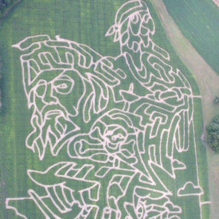 7. Derthick's Corn Maze (Mantua)
