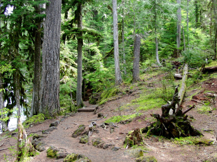 When you're ready to move on, continue along the loop trail which meanders through a magnificent old growth forest and passes numerous lovely viewpoints before connecting with the McKenzie River Trail, which will take you back to where you began.