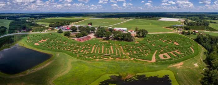 14. Cooley's Corn Maze at Strawberry Hill - Chesnee, SC