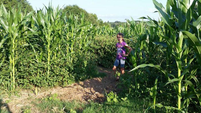 9. Little Cane Creek Farm & Corn Maze - West Union, SC